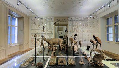 Naturkundemuseum Graz 3D Model